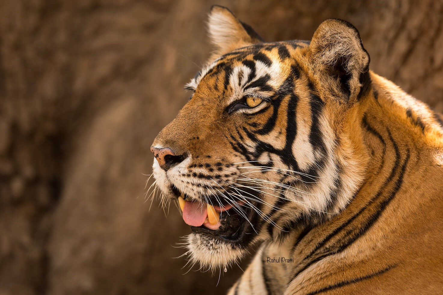 Tiger Reserves in India and Wildlife in India
