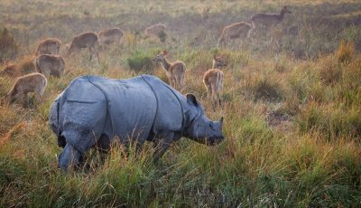 North East India Wildlife Packages Itineraries