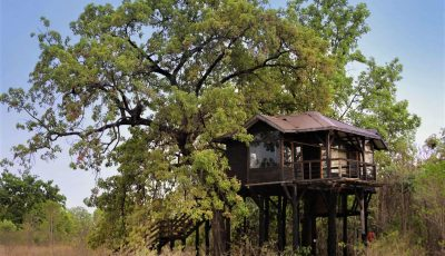 Pench National Park Hotels and Resorts