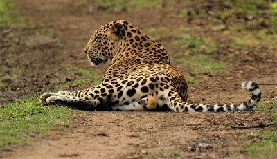 South India Wildlife