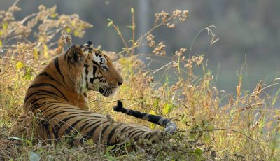 Jungle safari in Madhya Pradesh at the Kanha National Park