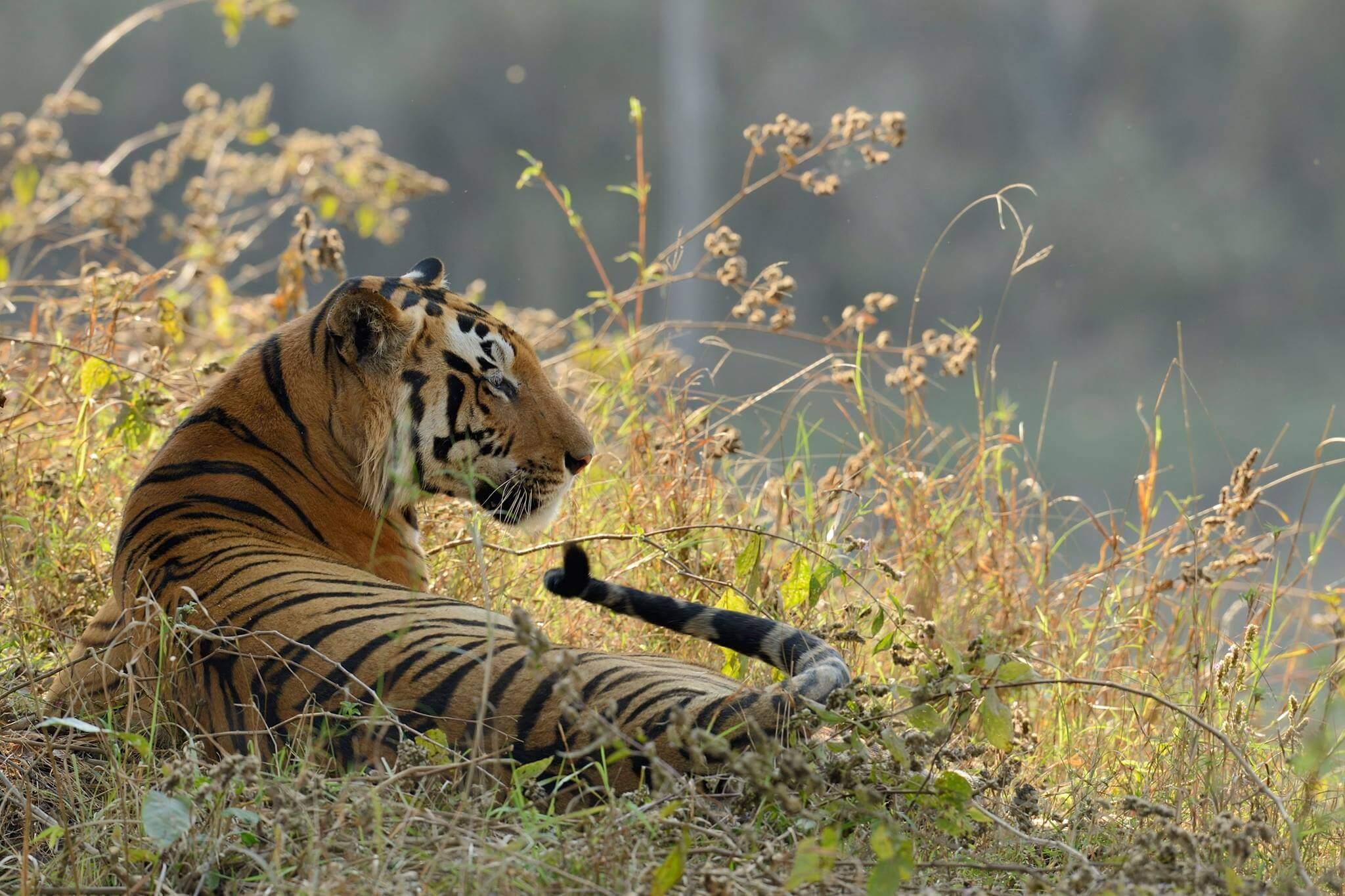 Jungle safari in Madhya Pradesh at the Kanha National Park