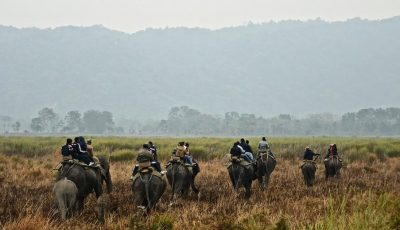 Elephant Safari at Kaziranga National Park