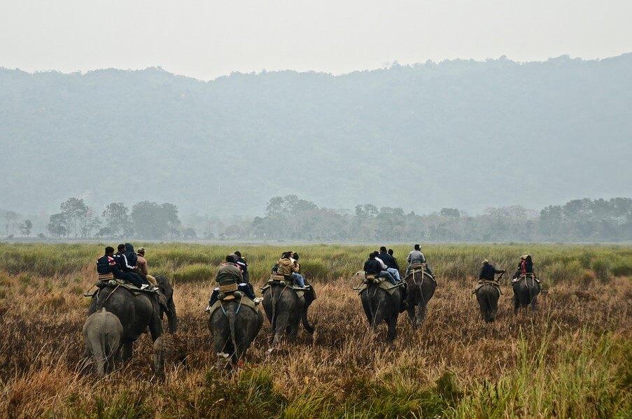 Elephant Safari at Kaziranga National Park