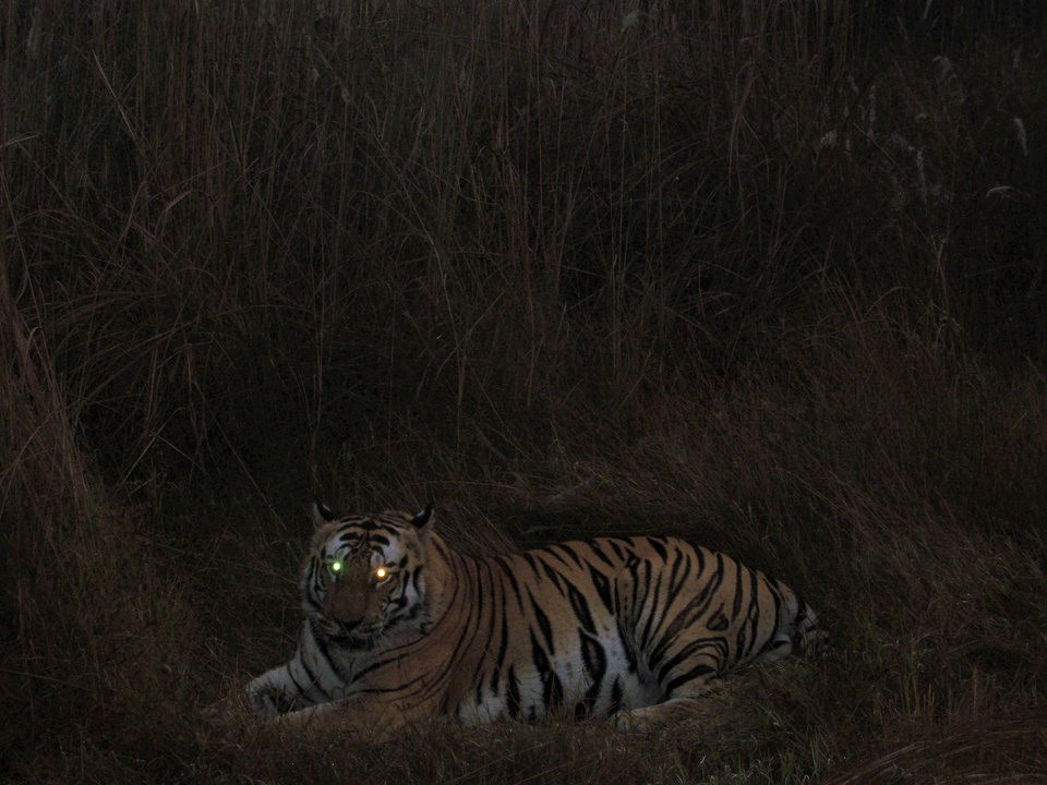 Night Jungle Safari in India