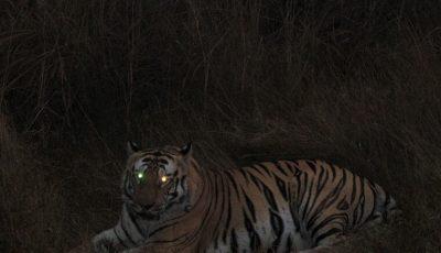 Night Jungle Safari in India