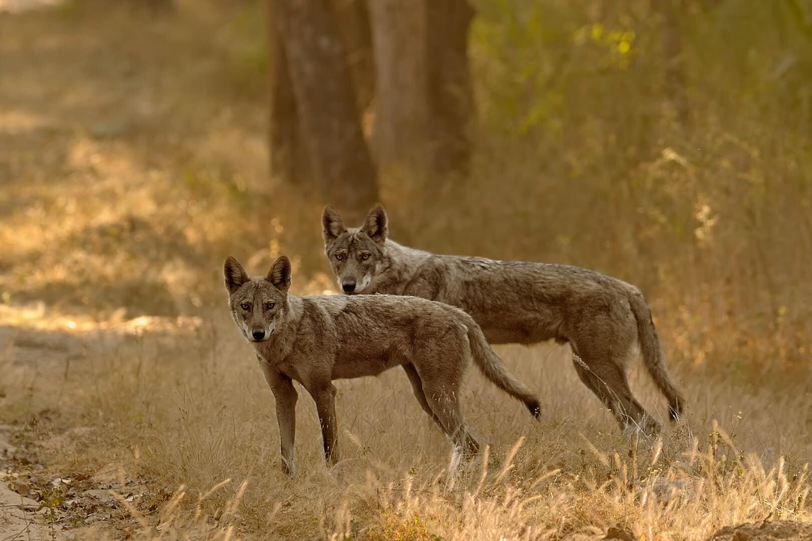 Wildlife safari in Karnataka at the Nagarhole National Park