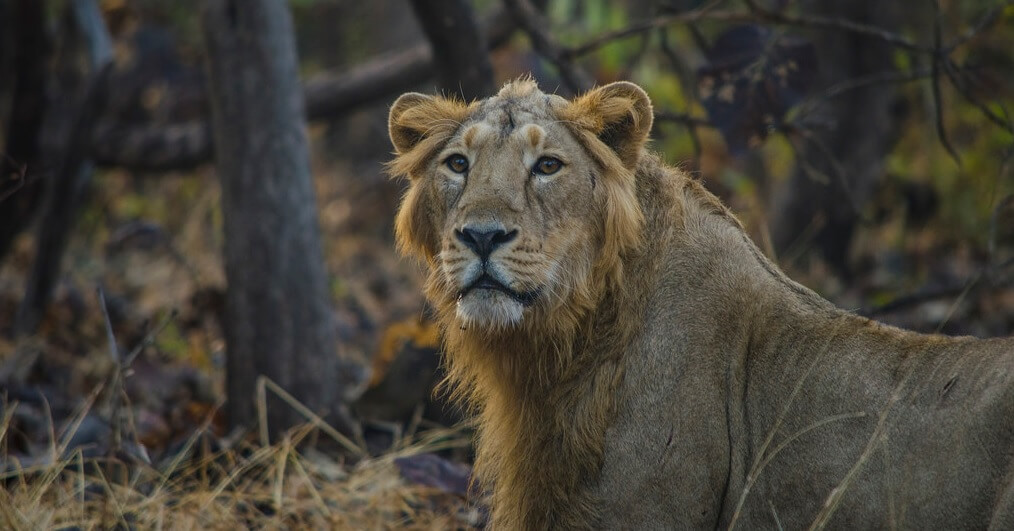 taj mahal and lion safari in India tour