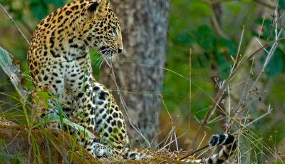 satpura and pench national park safari
