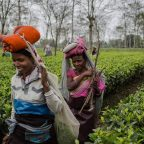 Tea Tourism in India - Assam Tea Gardens
